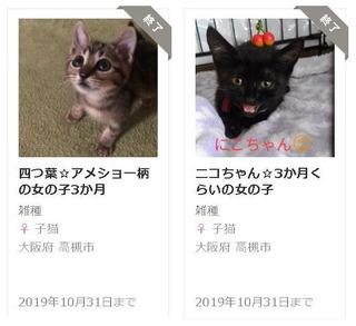 四つ葉&ニコ.jpg