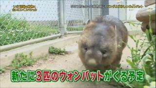 shimuradoubutsuen04.jpg